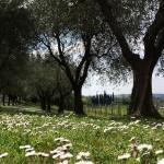 foto_alice_olivi_e_margherite_800x586