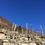 foto_alice_terrazzamenti_800x600