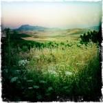foto_guccione_vigna