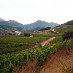 foto_cardedu_cannonau_vineyards_800x581