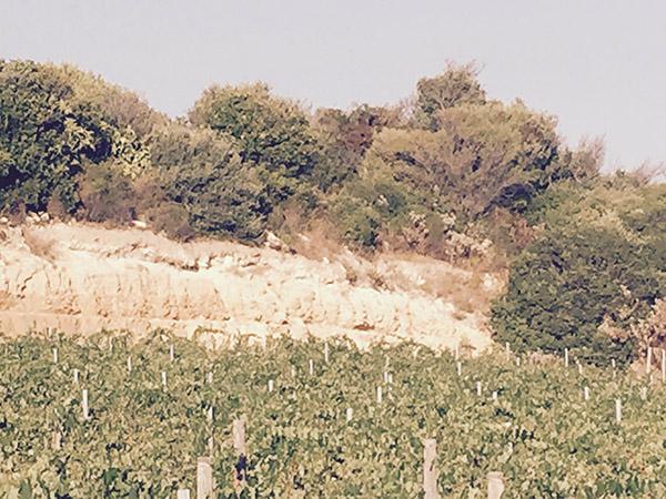 foto_columbu_vineyards_600x450